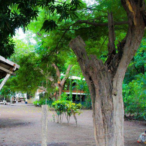 Houses in Playa del Coco