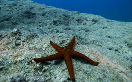 Sea Star on a Ledge in Greece