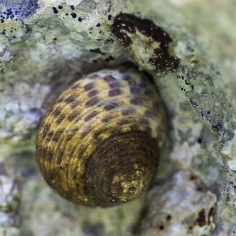 A Snail Shell in the Adriatic Sea of Croatia