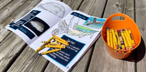Inside The Sharks, Turtles And Underwater Things Colouring Book Hero
