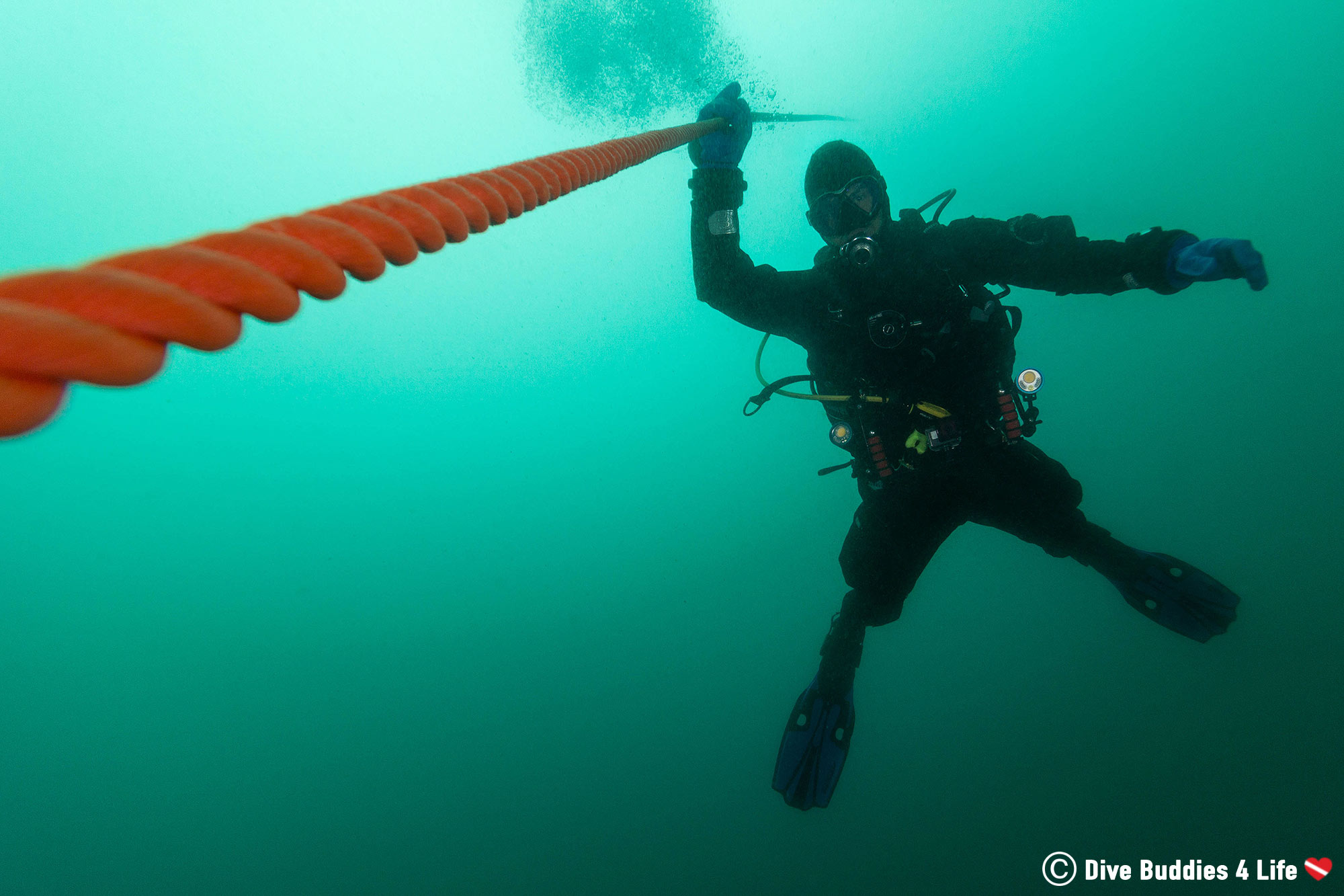 Joey Clinging To An Anchor Line On A Scuba Diving Safety Stop In Europe