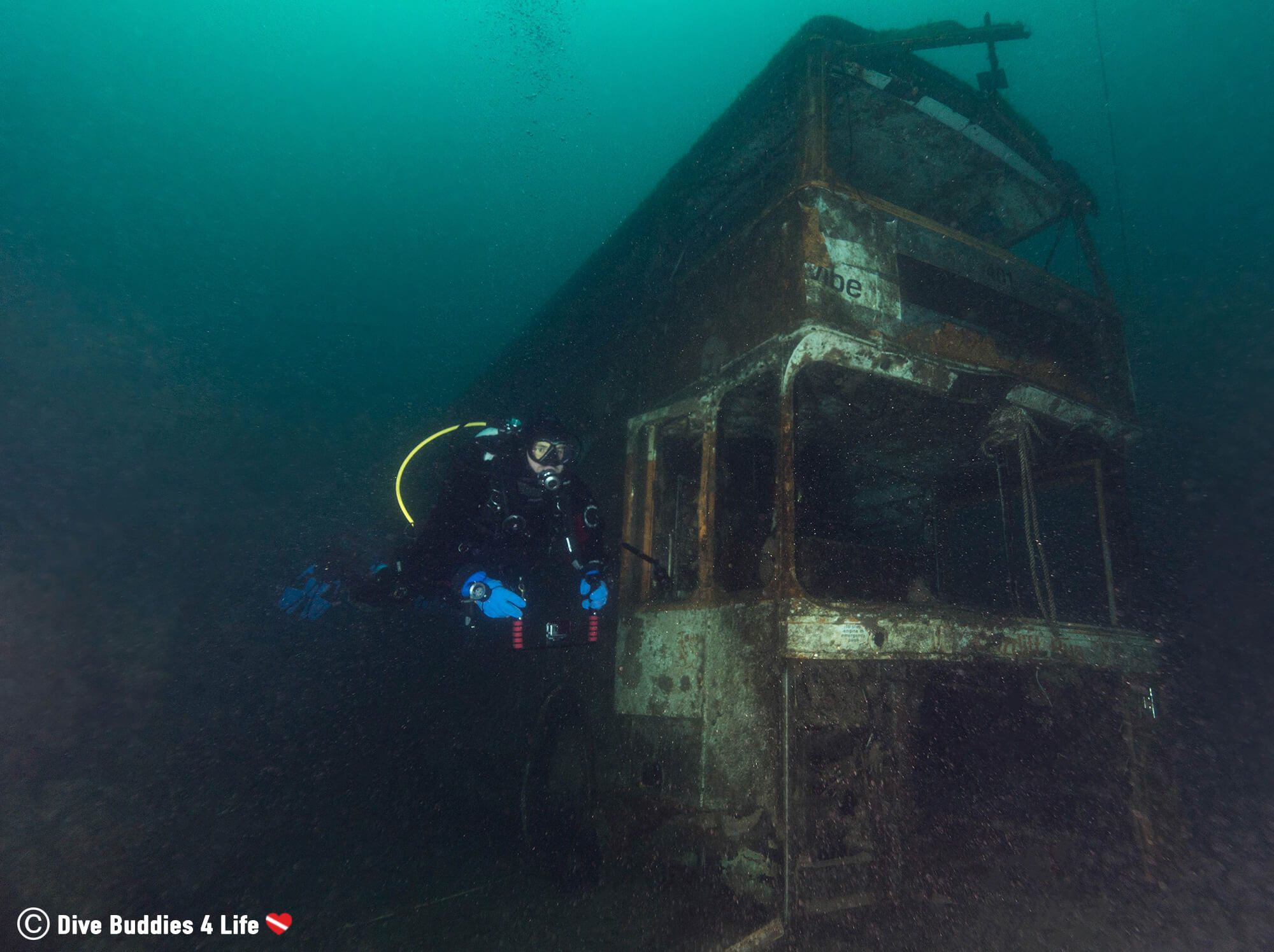 Joey Diving Alongside A Double Decker Bus Sunken Underwater In Chepstow, United Kingdom
