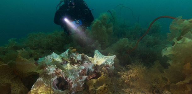 Joey Illuminating The Large Discarded Whale Bone On The Bottom Of Dildo, Newfoundland, Diving Canada