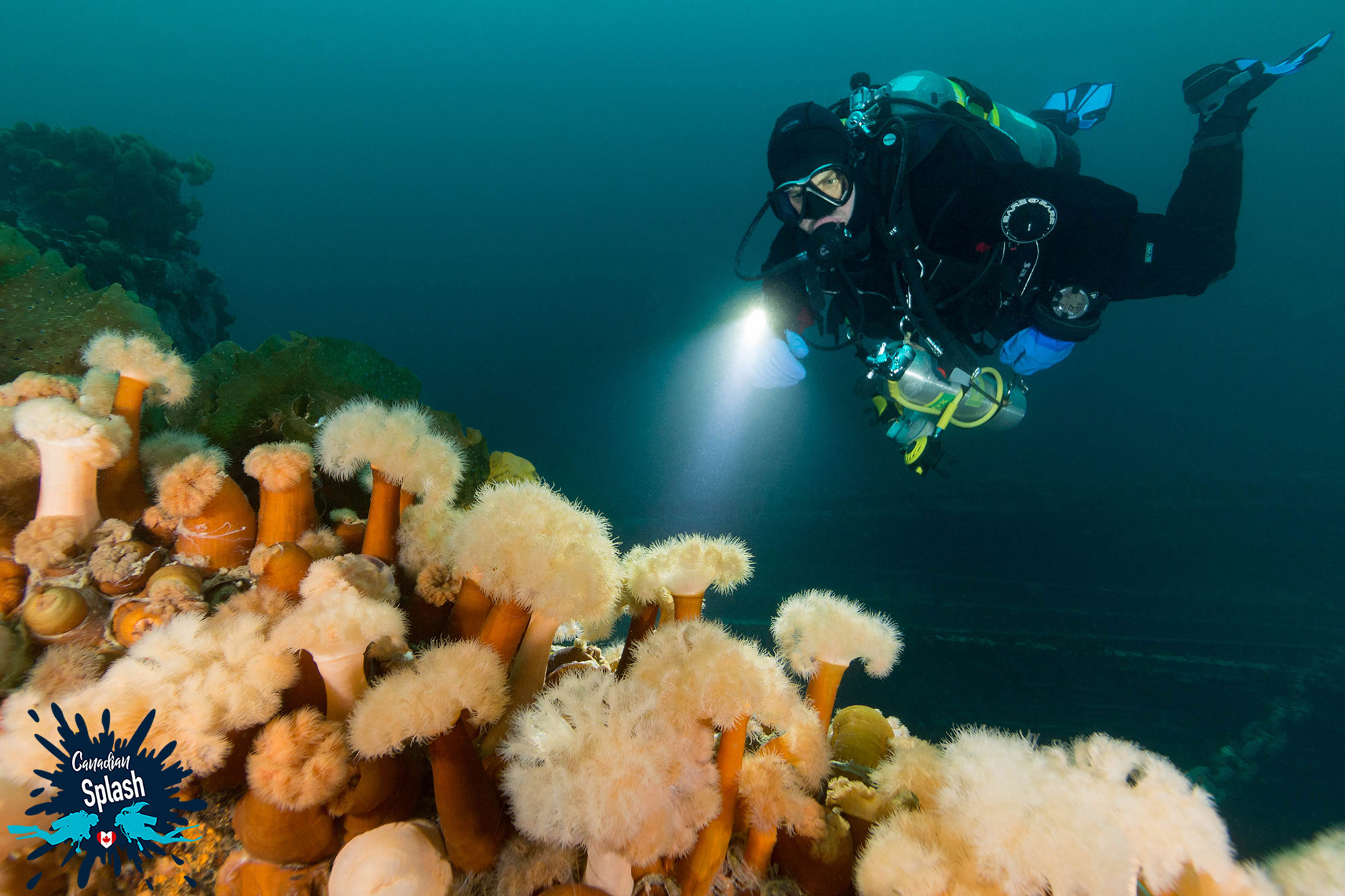 Joey Lighting Up Aneomnes On The Shipwrecks In Newfoundland, Scuba Diving Canada