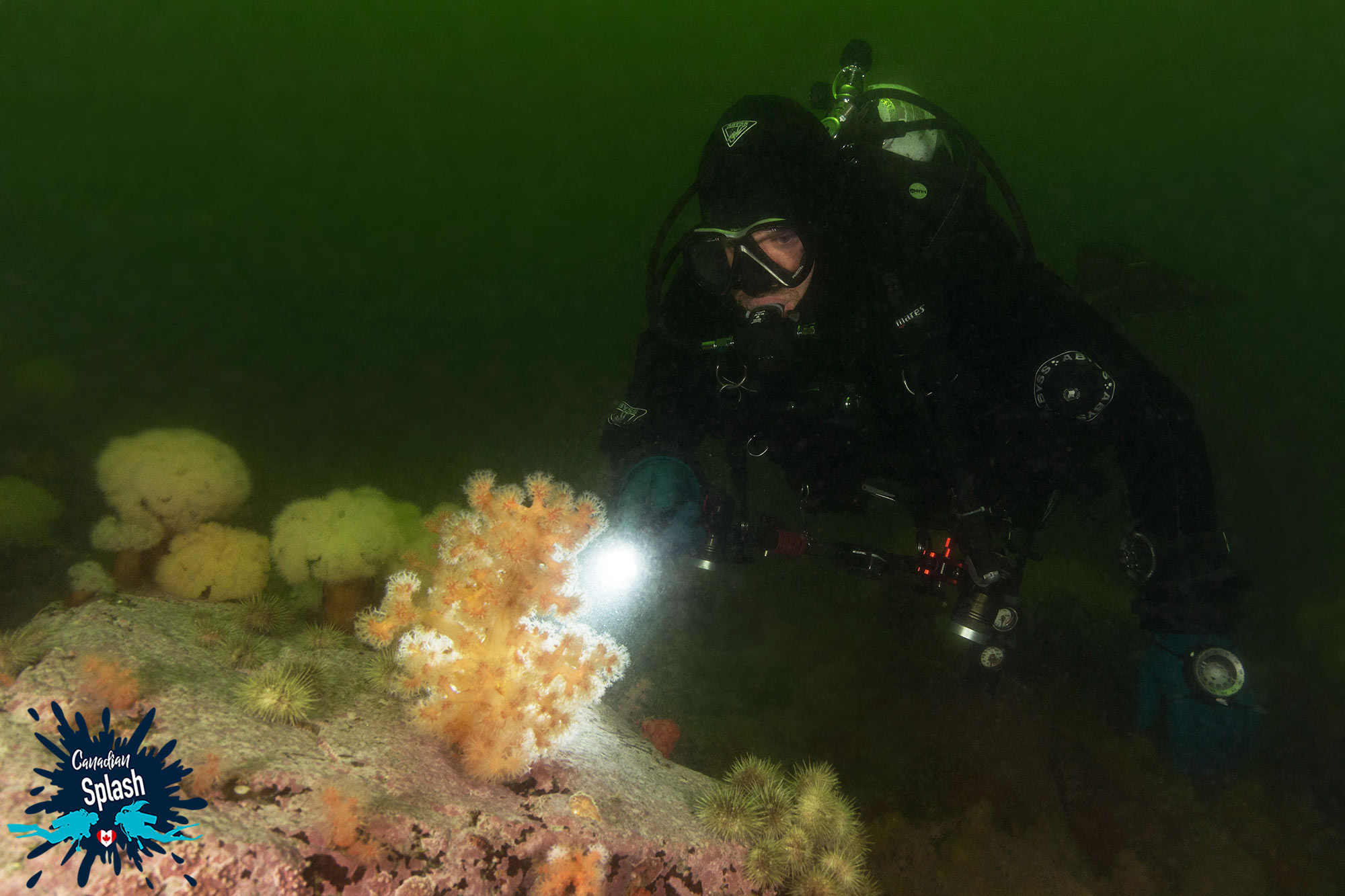 Joey Lighting Up A Piece Of Soft Coral On A Rock In Les Escoumins, Quebec, Scuba Diving In Canada