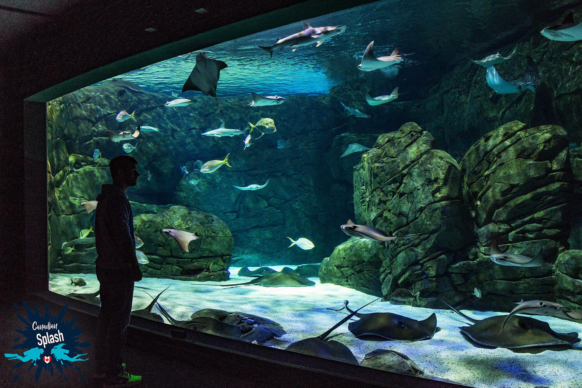 Joey Looking At The Ray Bay Tank At Ripley's Aquarium Of Canada, Toronto, Ontario
