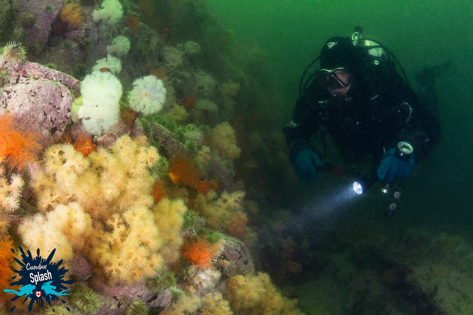 Joey Scuba Diving Along An Anemone Covered Wall In Les Escoumins, Quebec Diving, Canada