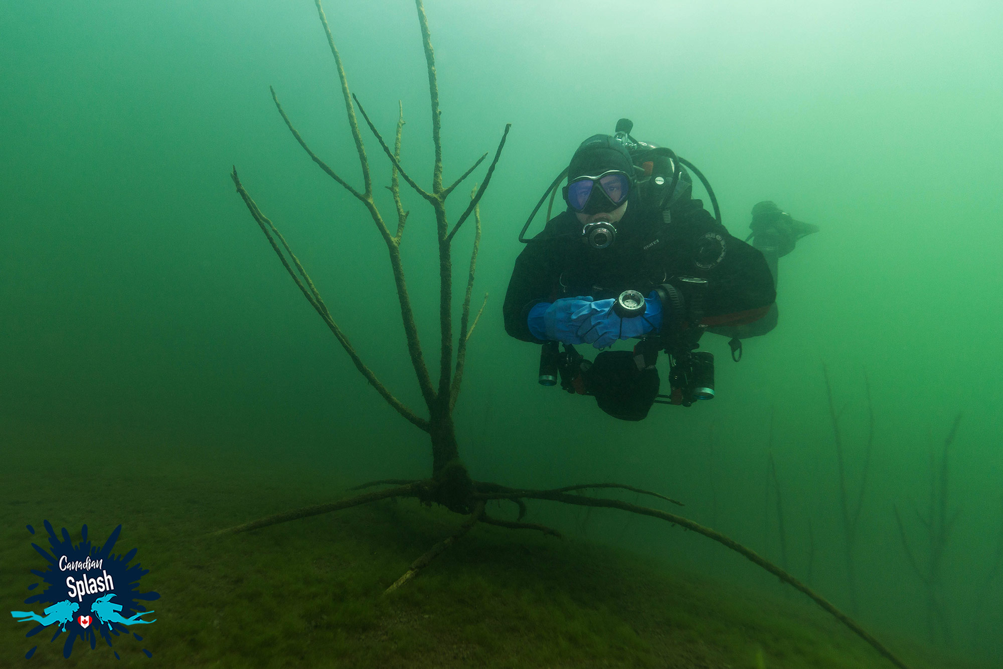 Joey Scuba Diving In The Tree Forest Of Turtle Lake, Temagami, Northern Ontario Scuba, Canada
