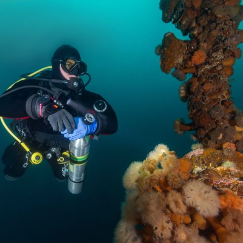 Joey Scuba Diving The Shipwrecks Of Newfoundland And Looking At Anemones, Bell Island, Canada