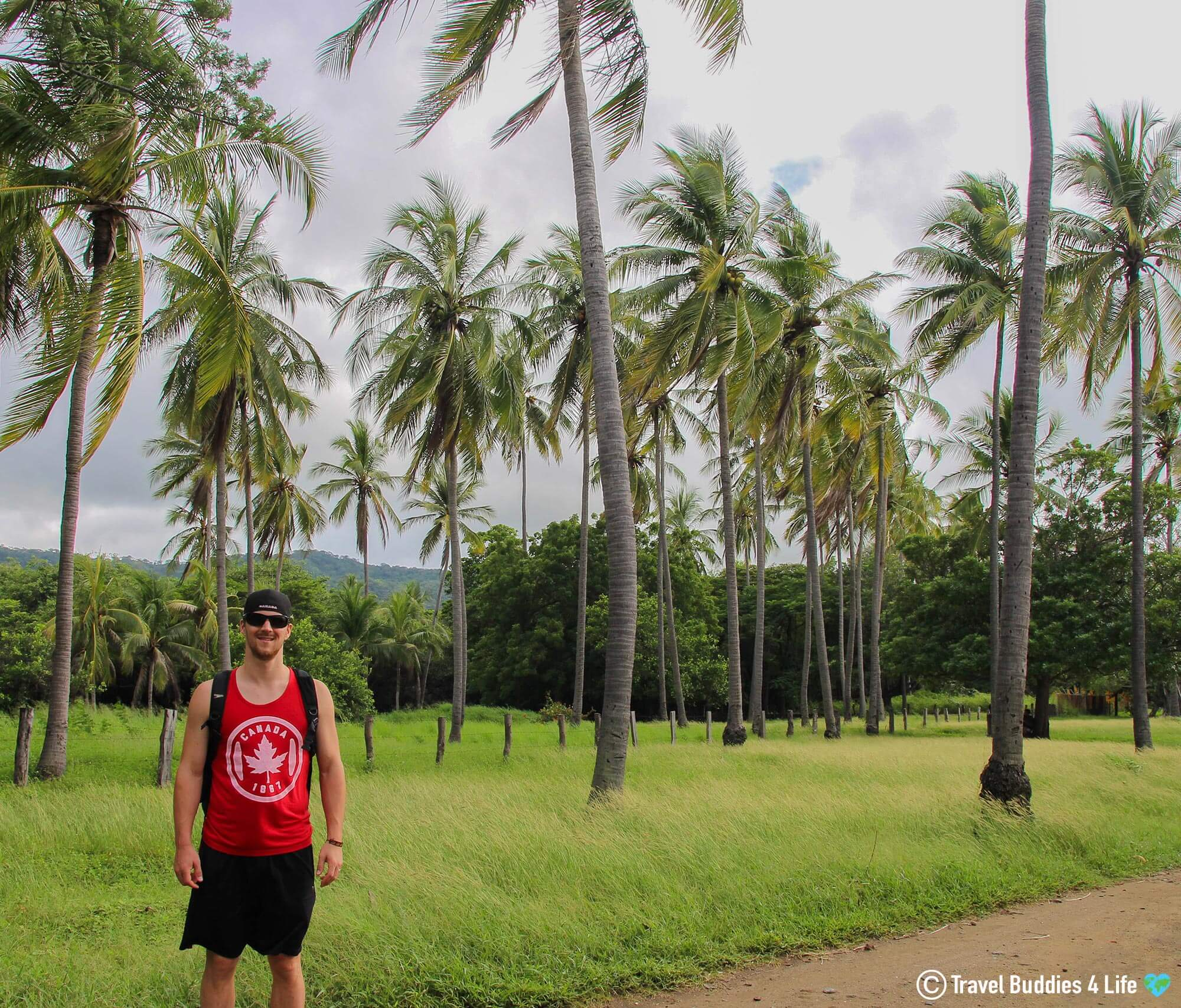Joey Standing In A Field Of Palm Trees On The Pacific Coast Of Costa Rica, Central America
