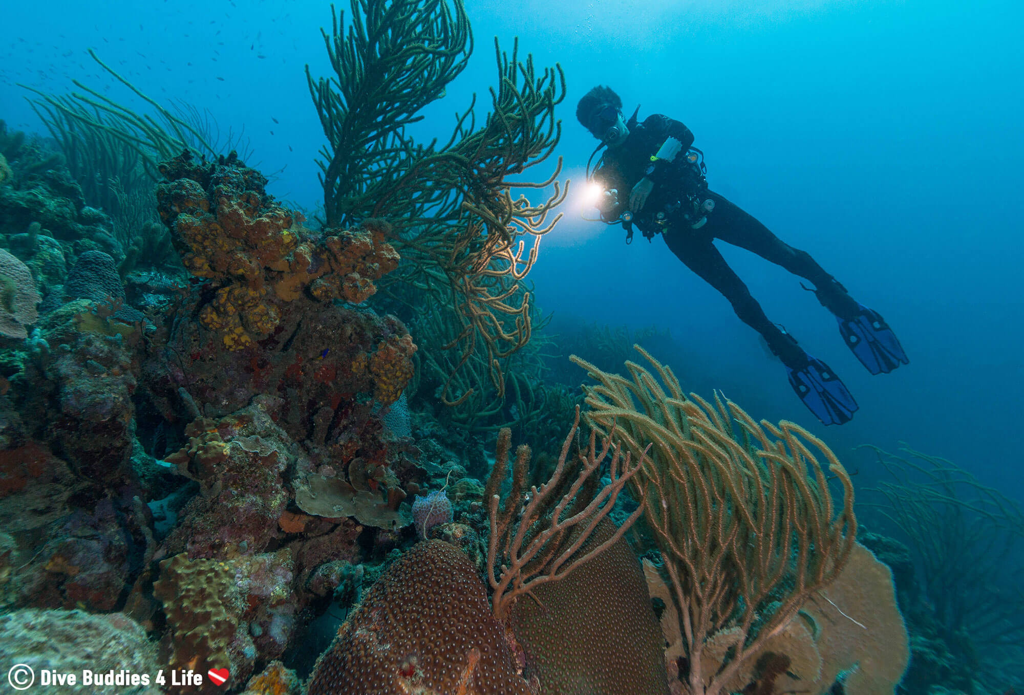 Joey Scuba Diving Bonaire with His Dive Right Light Behind Some Coral, the Dutch Antilles
