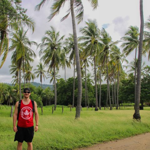 Joey and the Field of Palm Trees