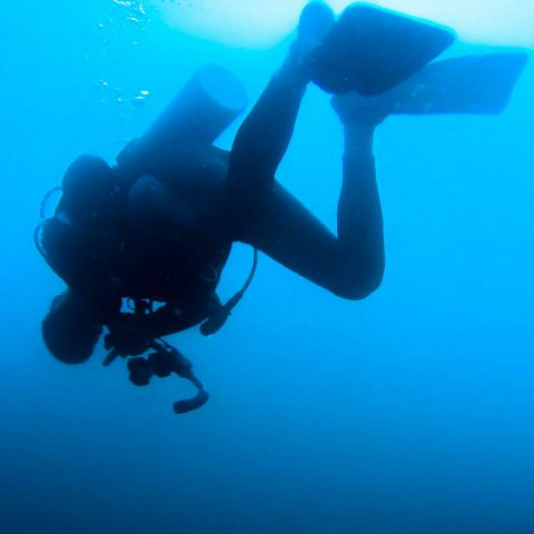 Scuba Dive Buddy Joey Floating Upside Down at Bat Islands