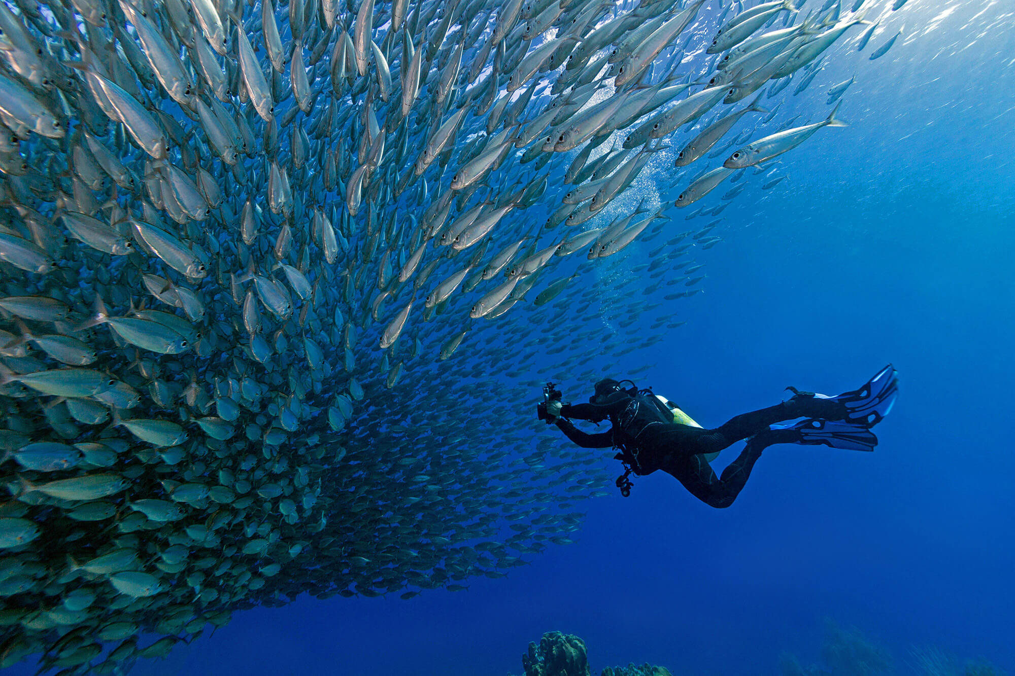 Joey On Bonaire Scuba Diving With A Large Bait Ball Of Fish, ABC Caribbean Islands