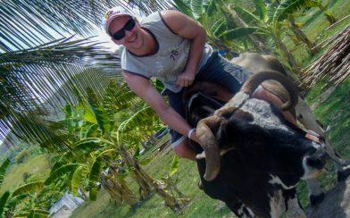 Joey on a Bull in Cuba