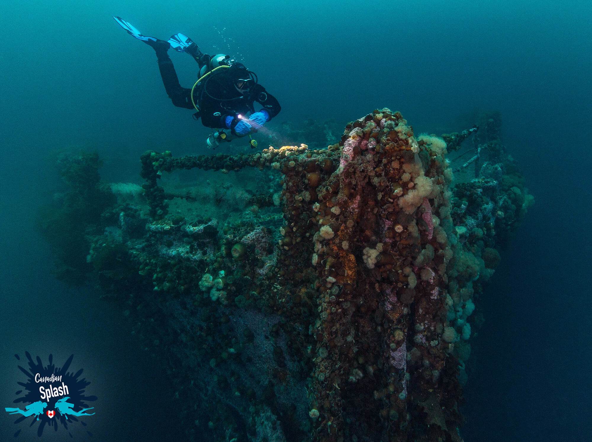 Joey On The Bow Of the PLM Shipwreck on Bell Island, Newfoundland, Canadian Scuba Diving