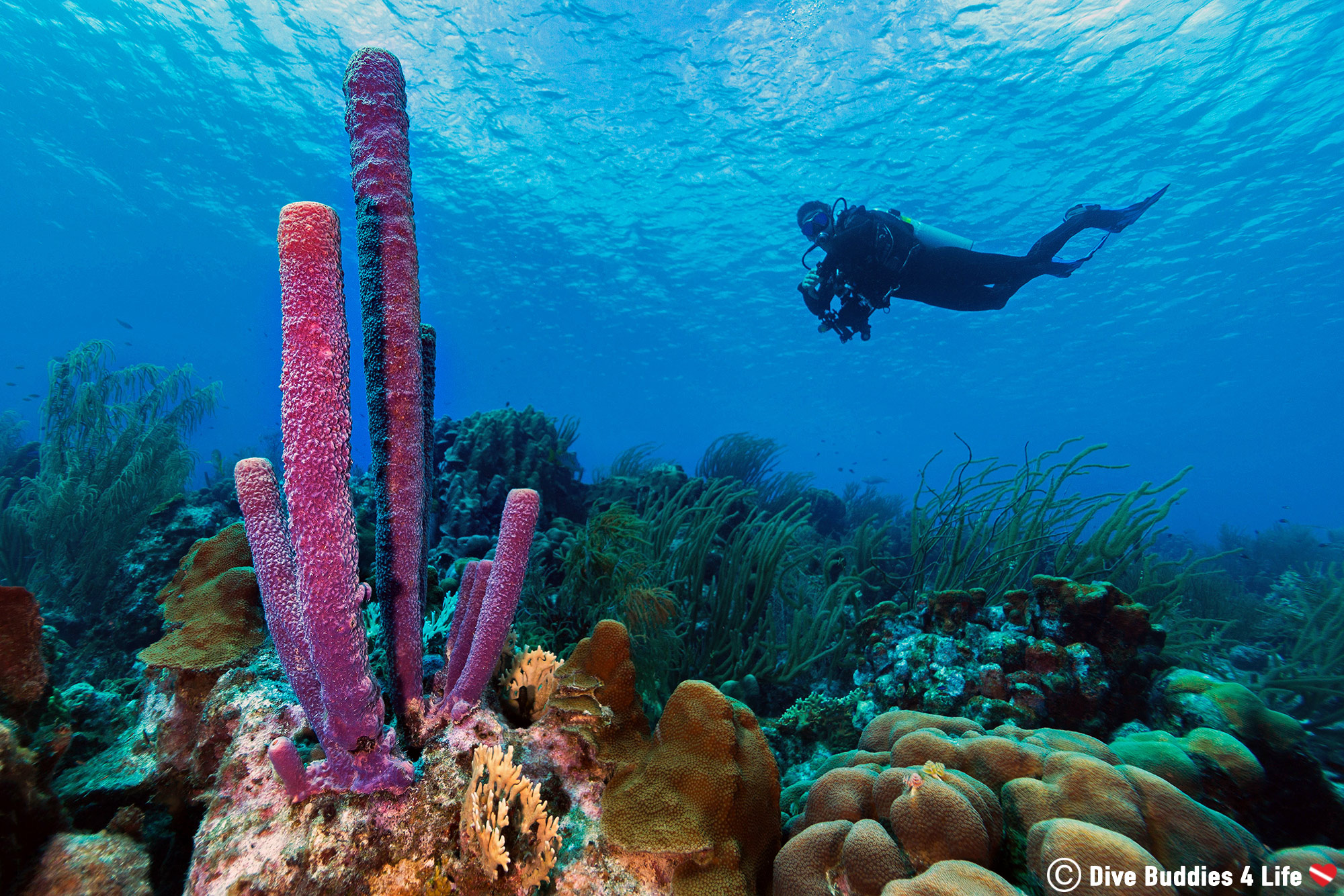 Joey's Dive Silhouette In The Ocean With A Pillar Of Purple Sponges, Bonaire, Dutch Caribbean