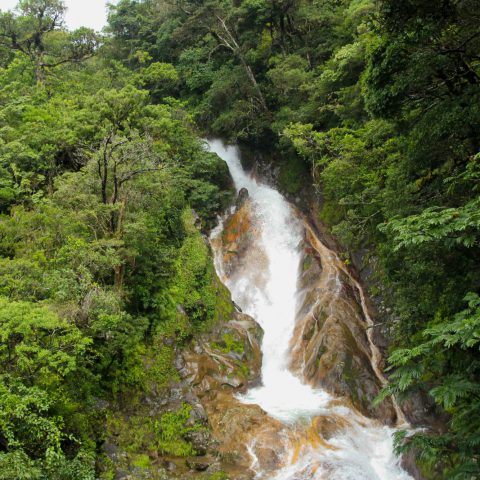 A Jungle Waterfall in the Rainforest