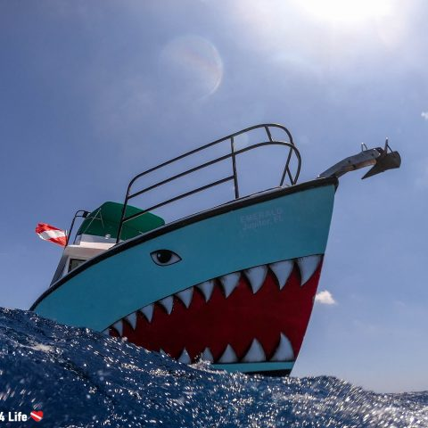 Jupiter Shark Diving Boat In The Wild Waters Of Florida, USA