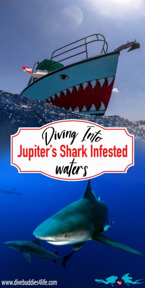 Jupiter Shark Diving Pinterest