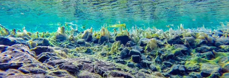 Slimy Lagoon Rocks