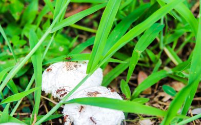 Leaf Cutter Ants and Mushroom