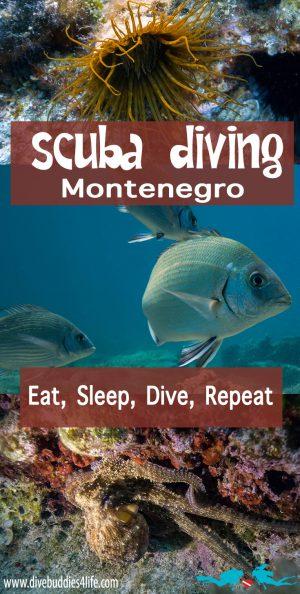 Montenegro Scuba Pinterest