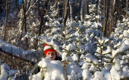 Nadine Peeking Through The Snow Covered Tree's