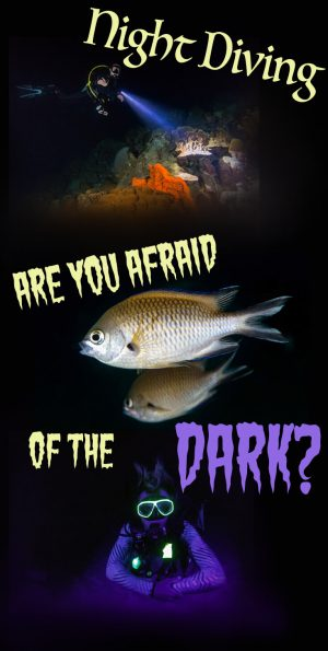 Night Diving Are You Afraid Of The Dark Pinterest
