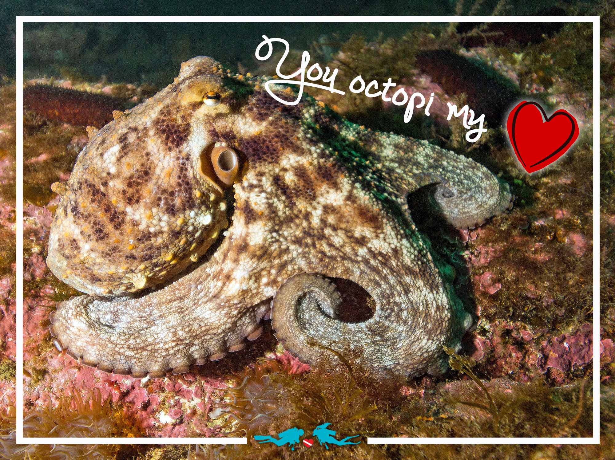 Octopus Valentine's Day Scuba Diving Love Quote
