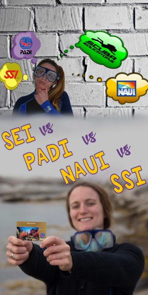 PADI Vs NAUI Vs SSI Vs SEI Pinterest