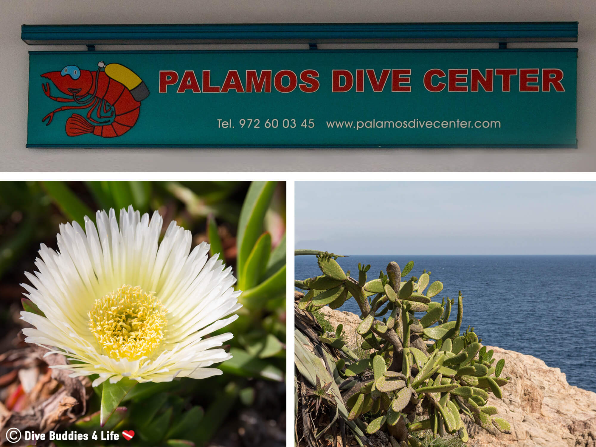 Palamos Dive Center On The Costa Brava Of Spain Mosaic