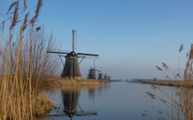 Peeking At The Kinderdijk Windmills Through Some Tall Hay