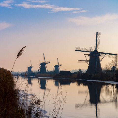 Pink Sky And Kinderdijk Windmills
