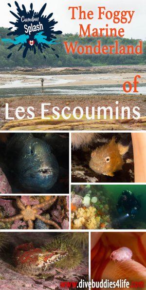Pinterest Les Escoumins Canadian Splash