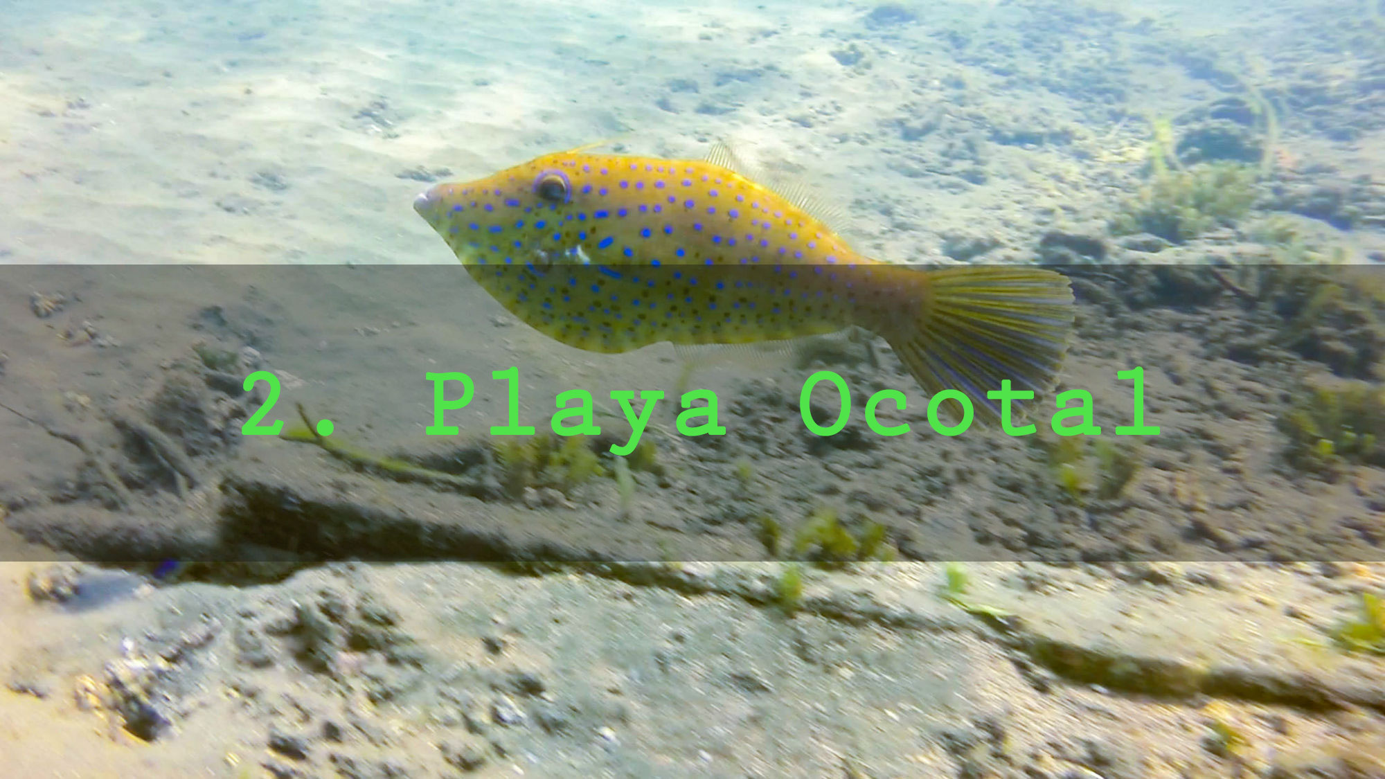 Snorkeling Playa Ocotal Beach
