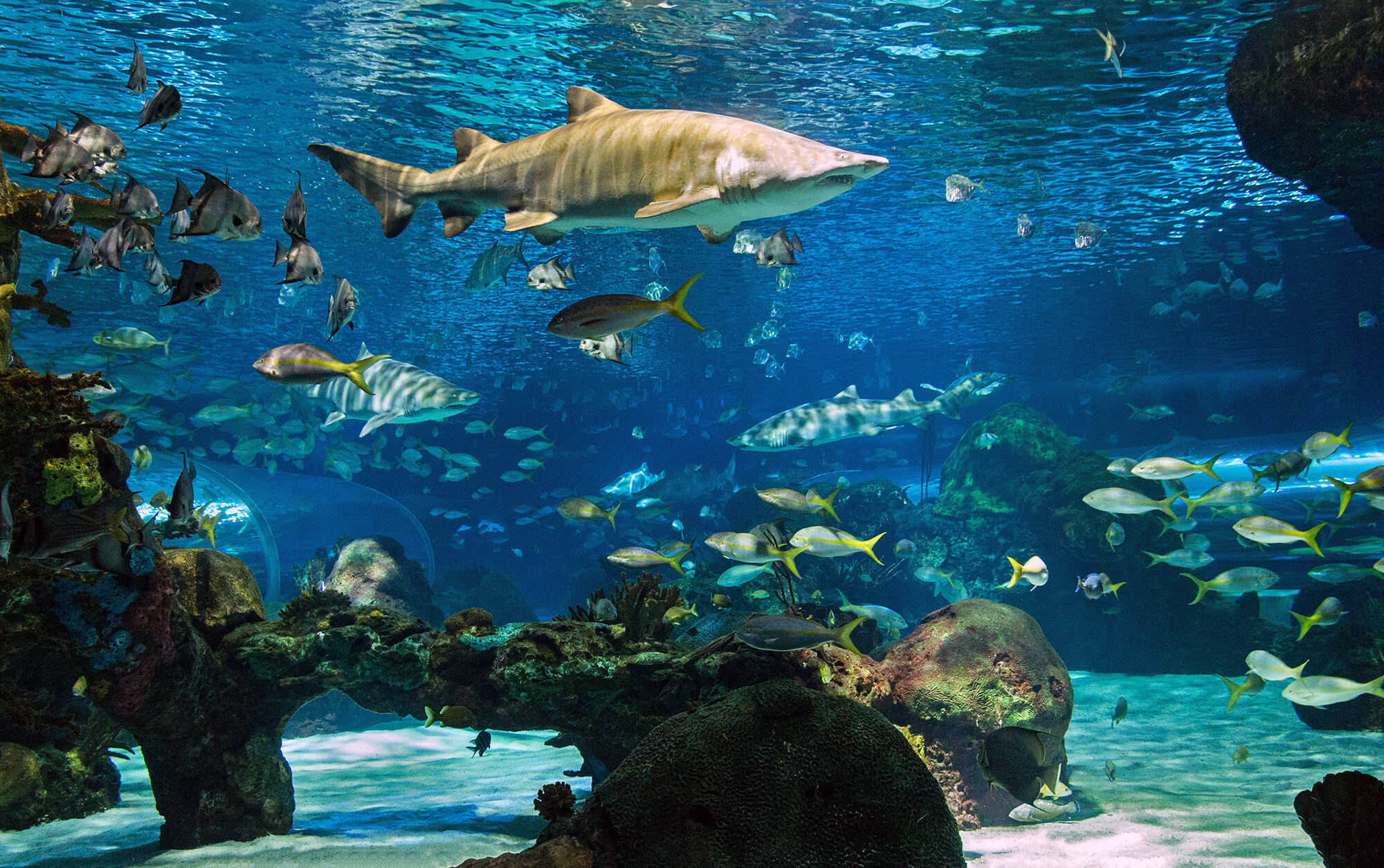 Ripley's Aquarium Of Canada Dangerous Lagoon Tank Overview, Scuba Diving Canada