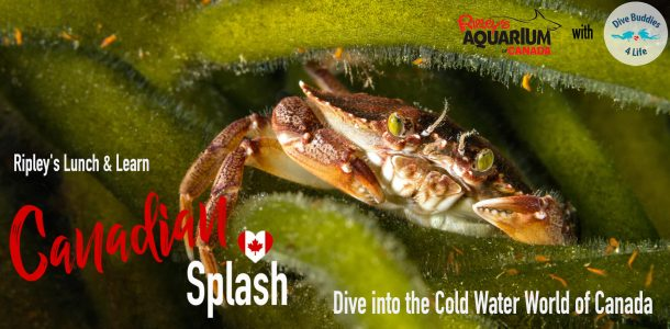 Ripley's Lunch And Learn Canadian Splash Event Thumbnail Image