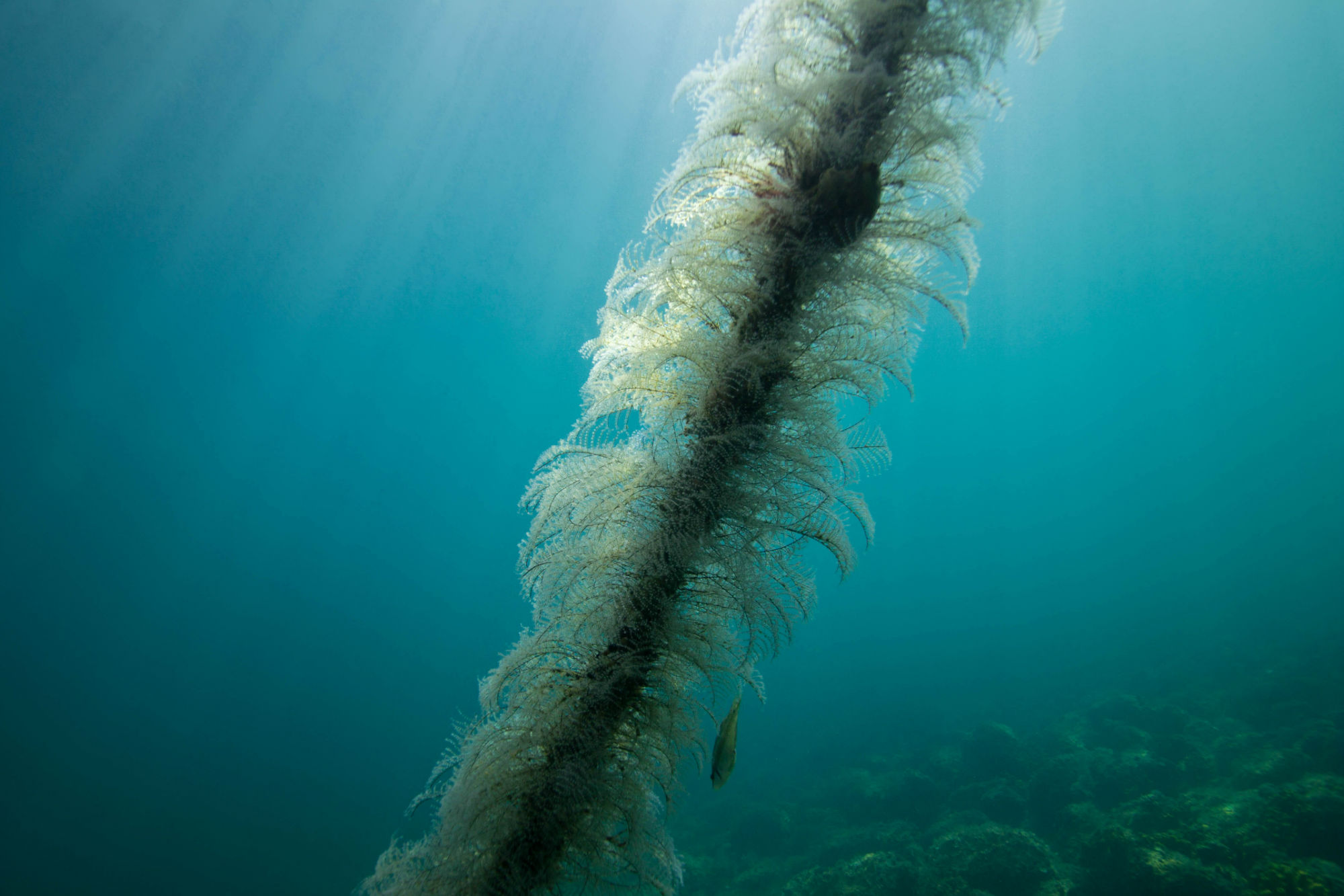 Underwater Rope in Slovenia