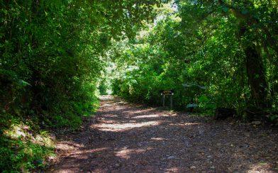 A Rough Road in Costa Rica