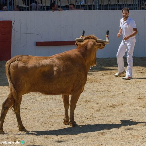 Running With The Bulls Festival In Spain, Europe
