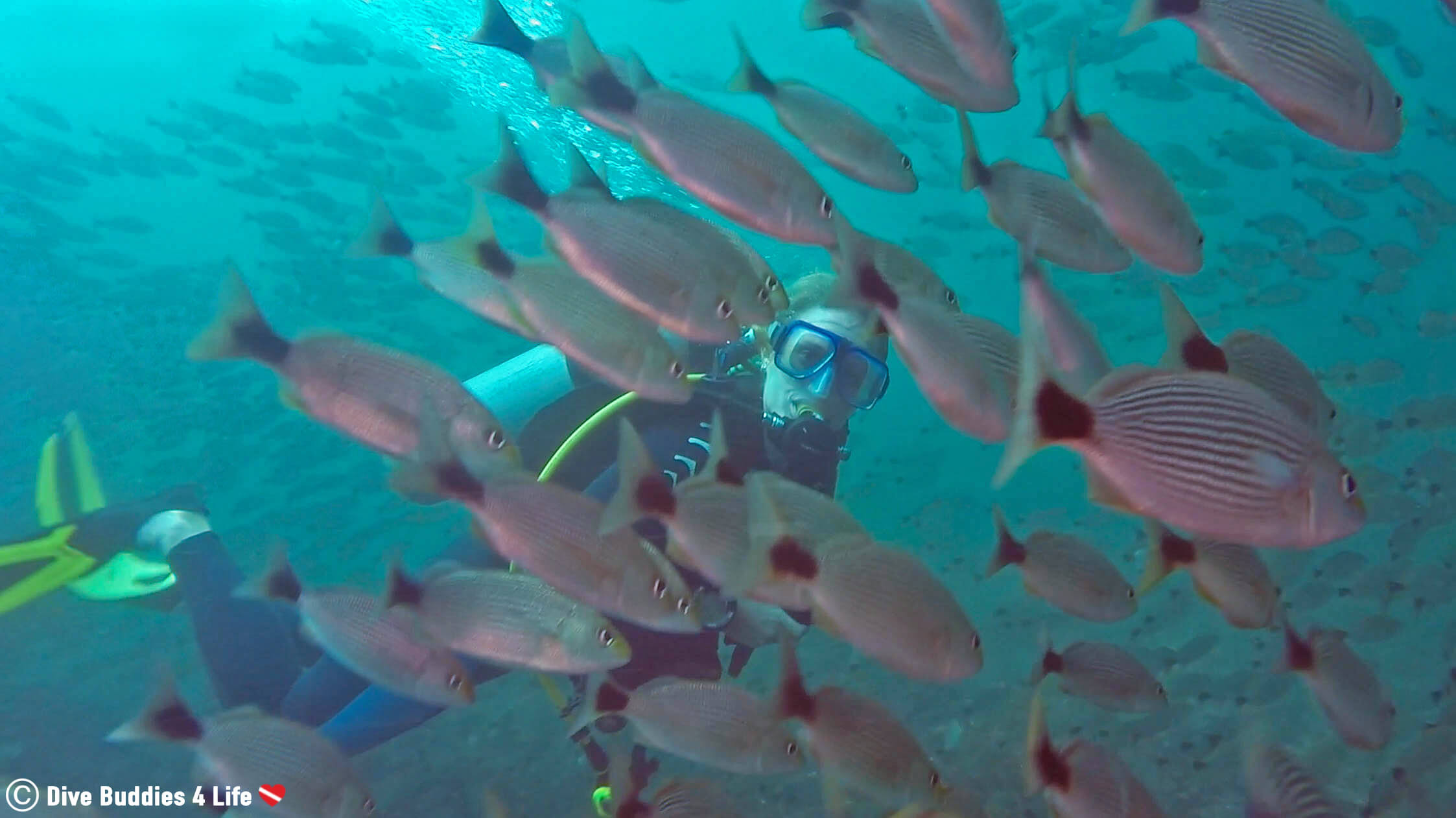Scuba Diver Ali Underwater In Costa Rica Swimming Through A Large School Of Fish At The Catalina Islands, Central America
