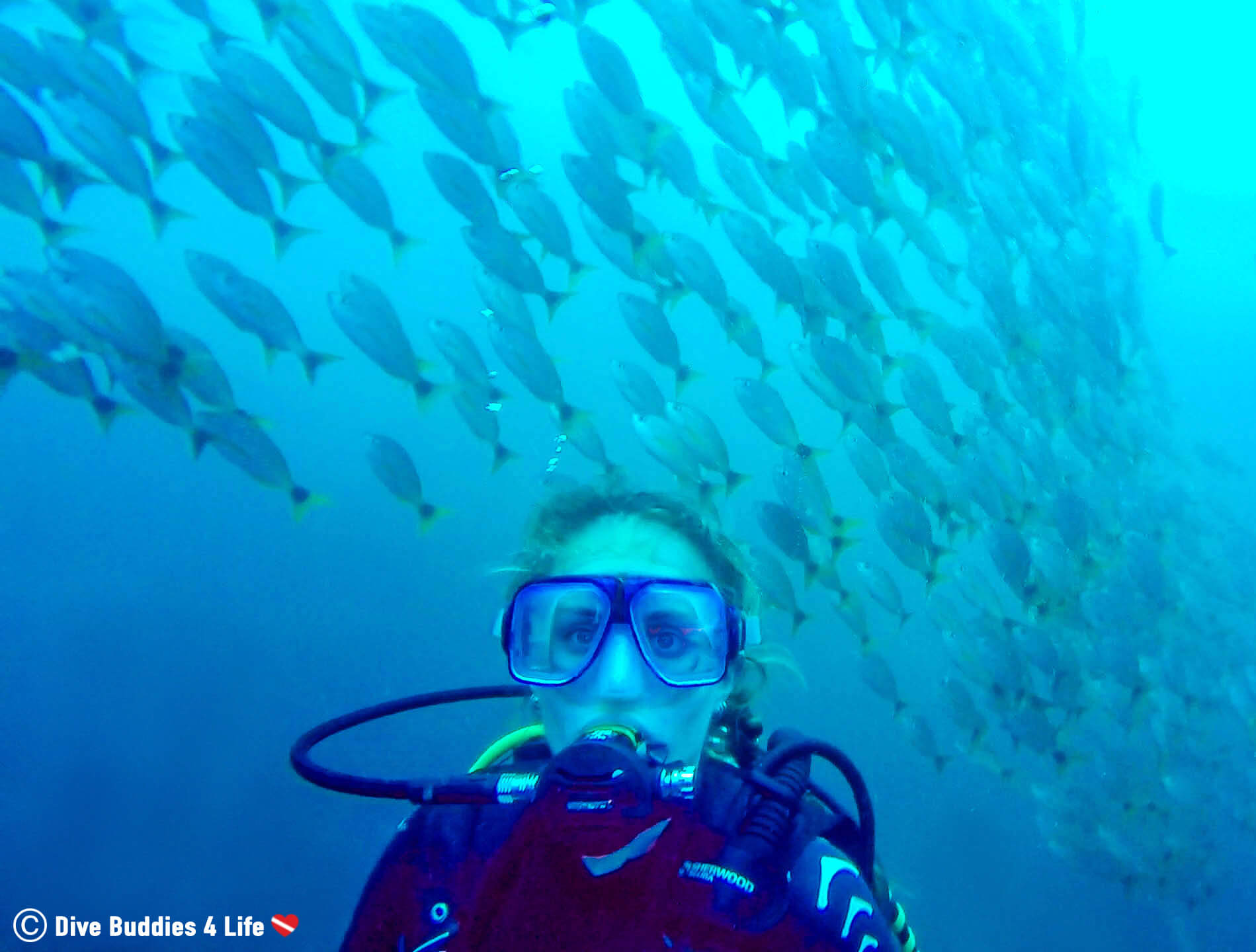 Scuba Diver Ali Underwater With A Bunch Of Grunt Fish At Bat Island, Costa Rica, Central America