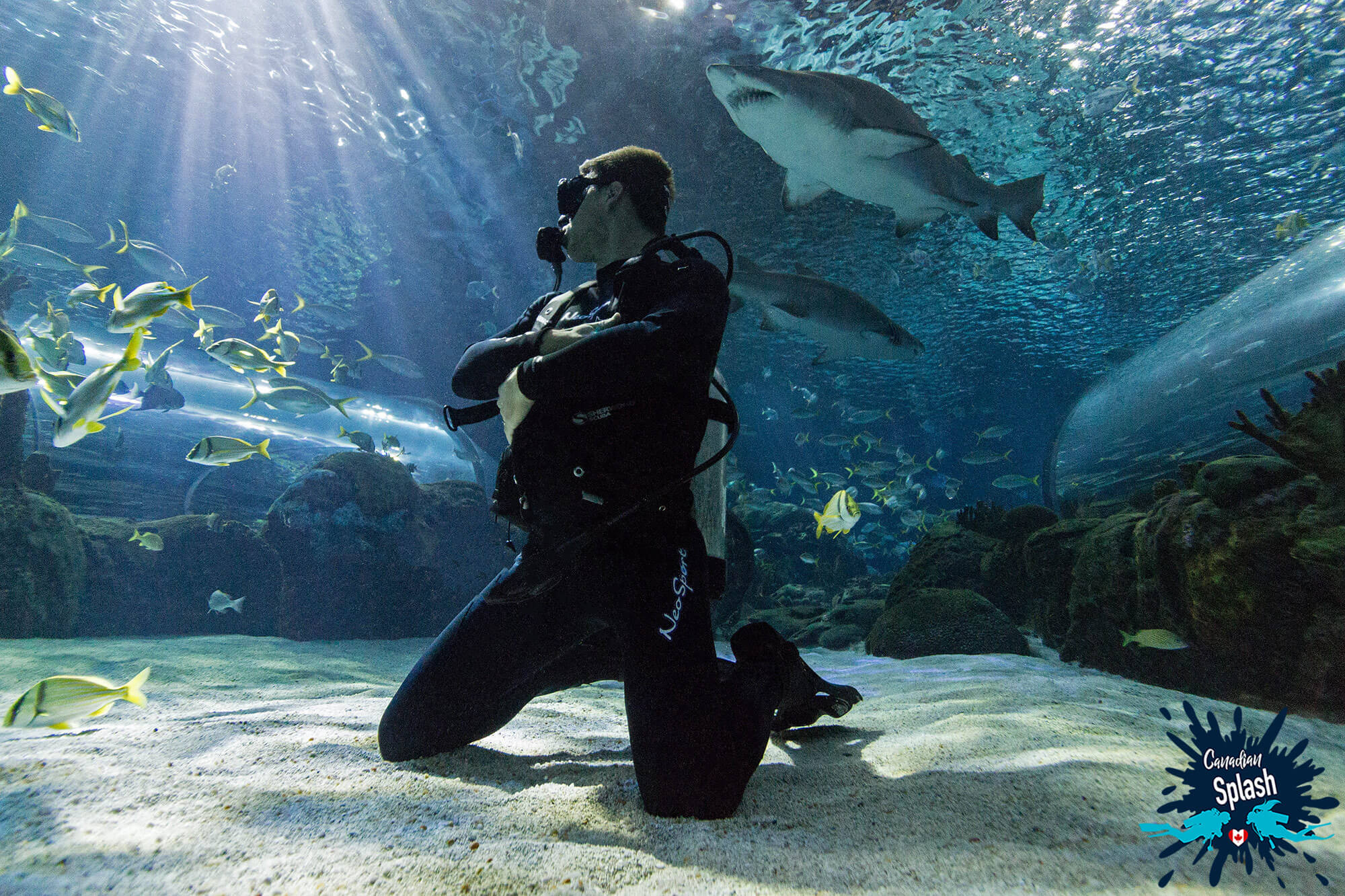 Scuba Diver Joey Kneeling On The Bottom Of Ripley's Aquarium Of Canada, Diving Toronto, Ontario, Canada