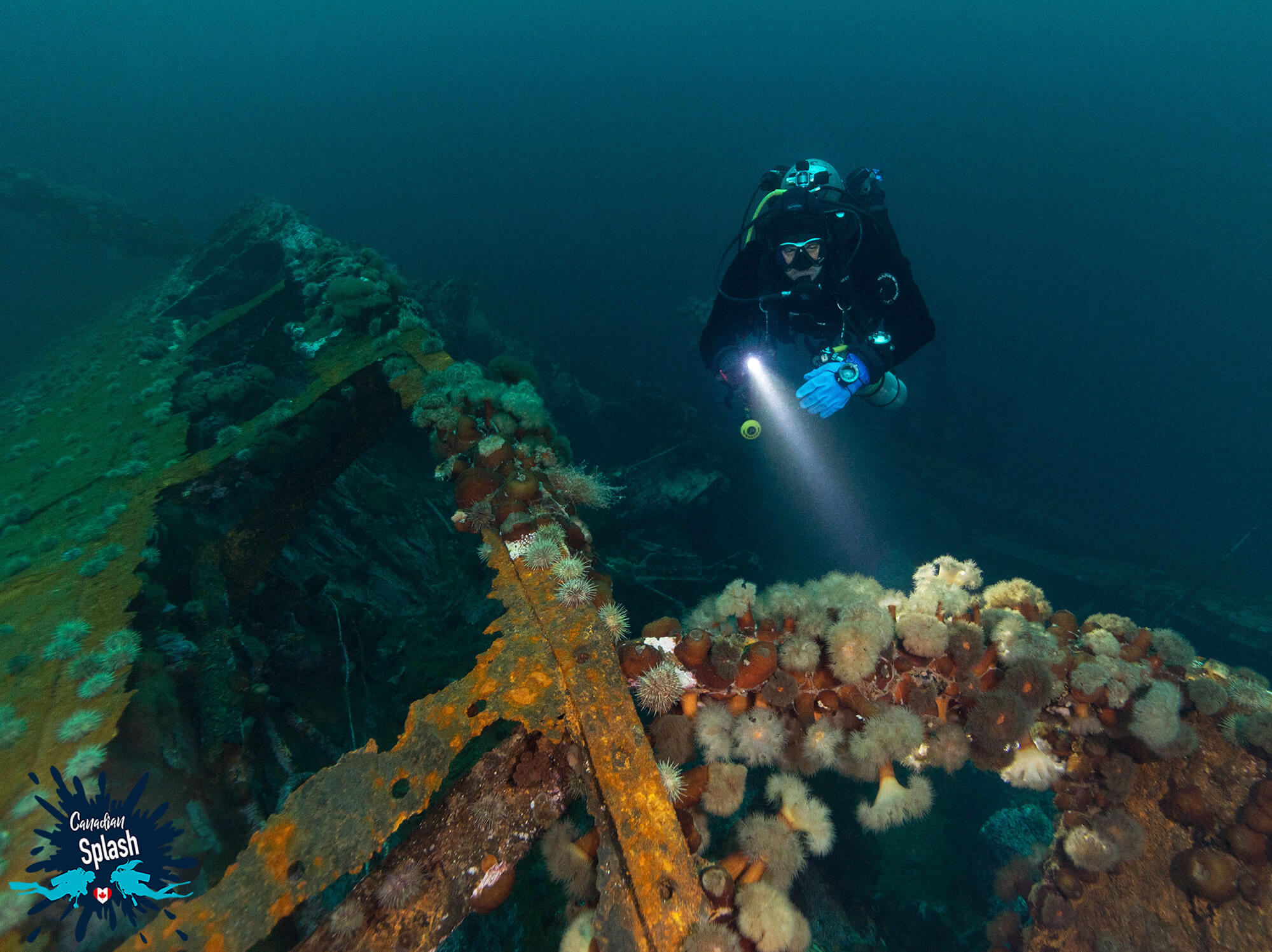 Scuba Diver Joey Underwater Exploring The Side Of A Bell Island Shipwreck In Newfoundland, Scuba Diving Canada