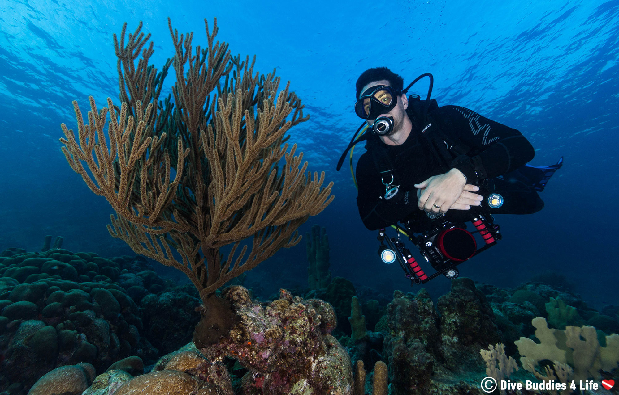 Scuba Diver Joey And A Piece Of Soft Coral On The Reef Of Bonaire, Dutch Caribbean