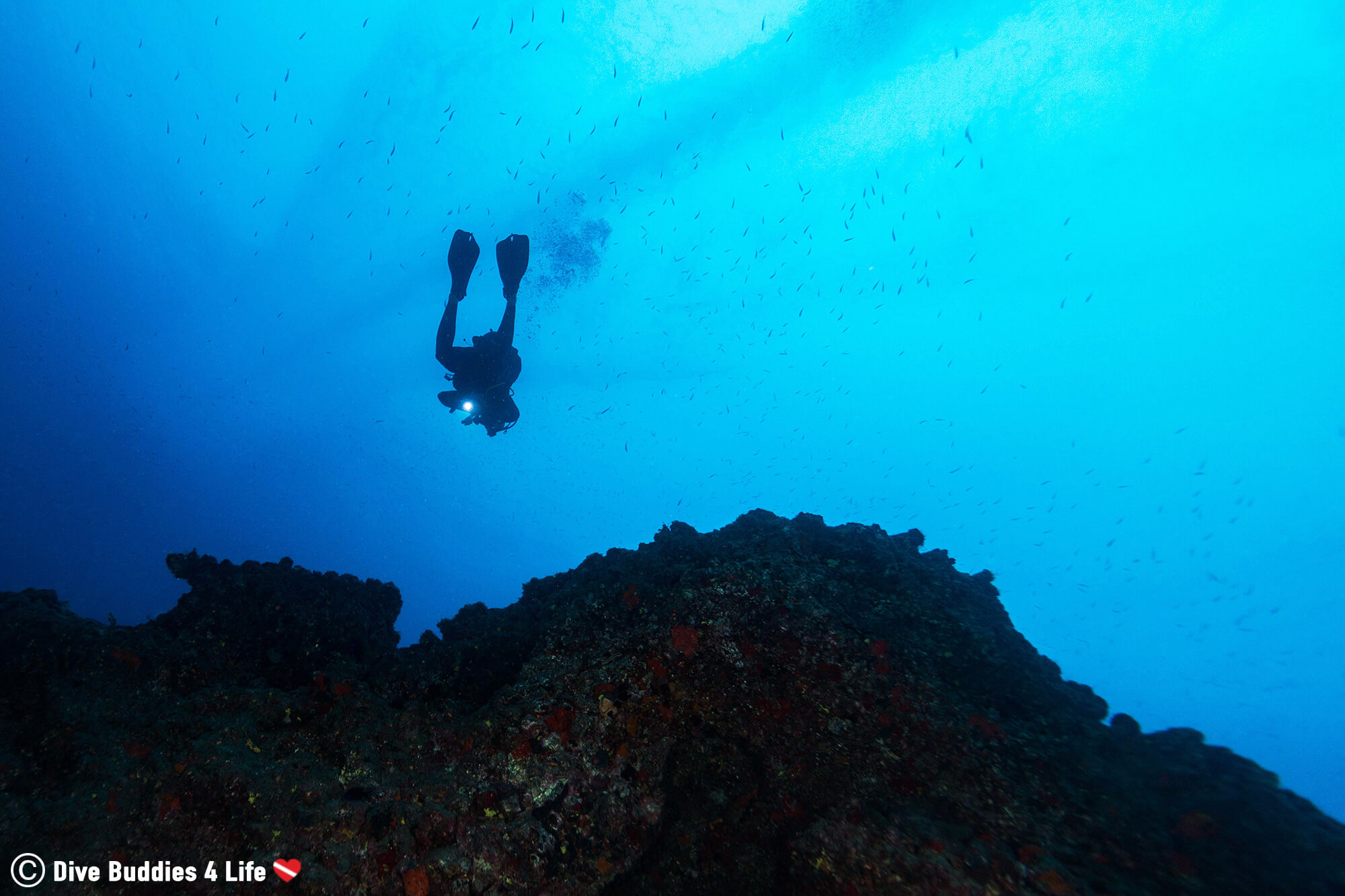 Scuba Diver And An Ocean Lava Wall in Lanzarote, Canary Island, Spain