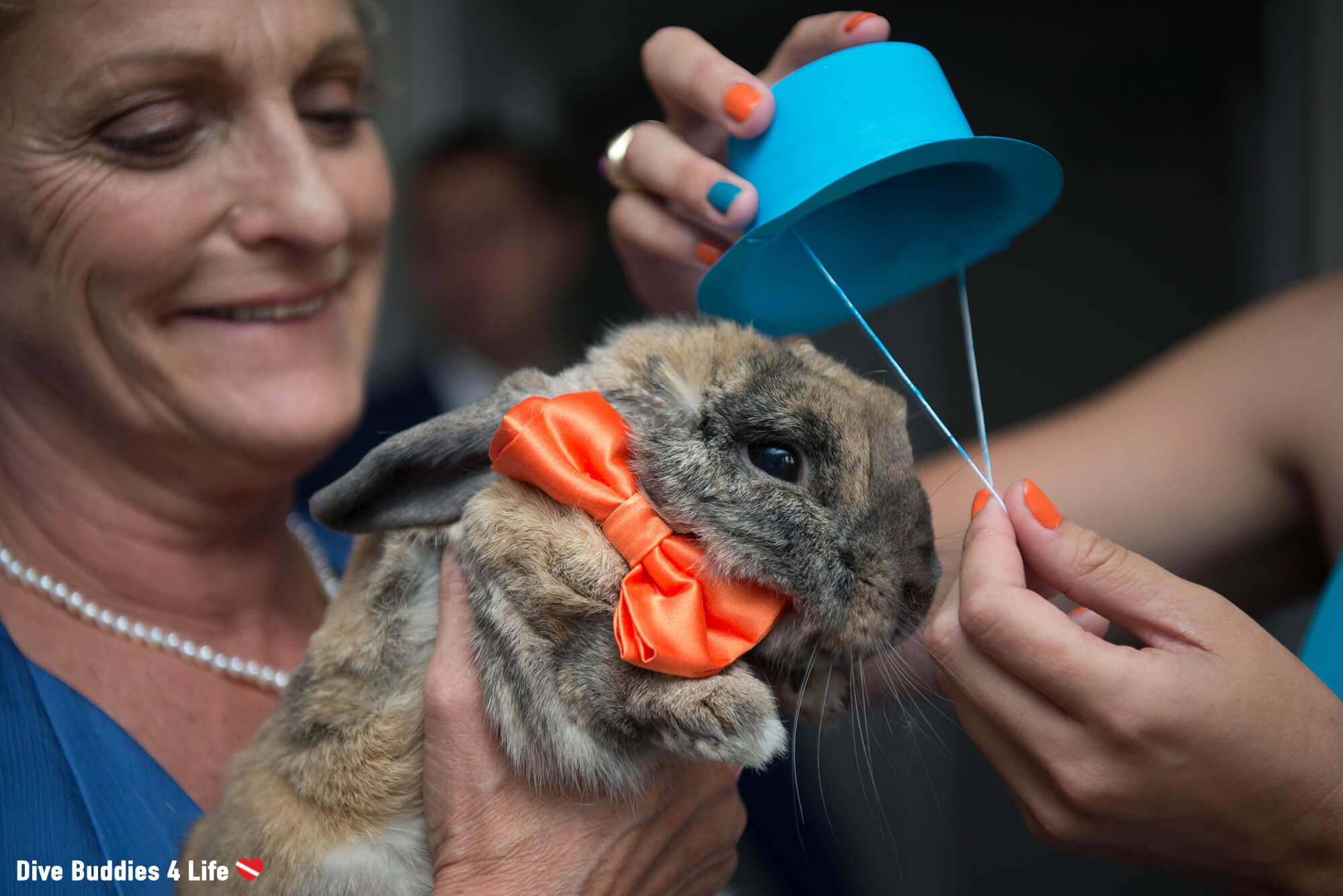 Scuba Diving Bunny Getting Ready For An Ocean Themed Wedding