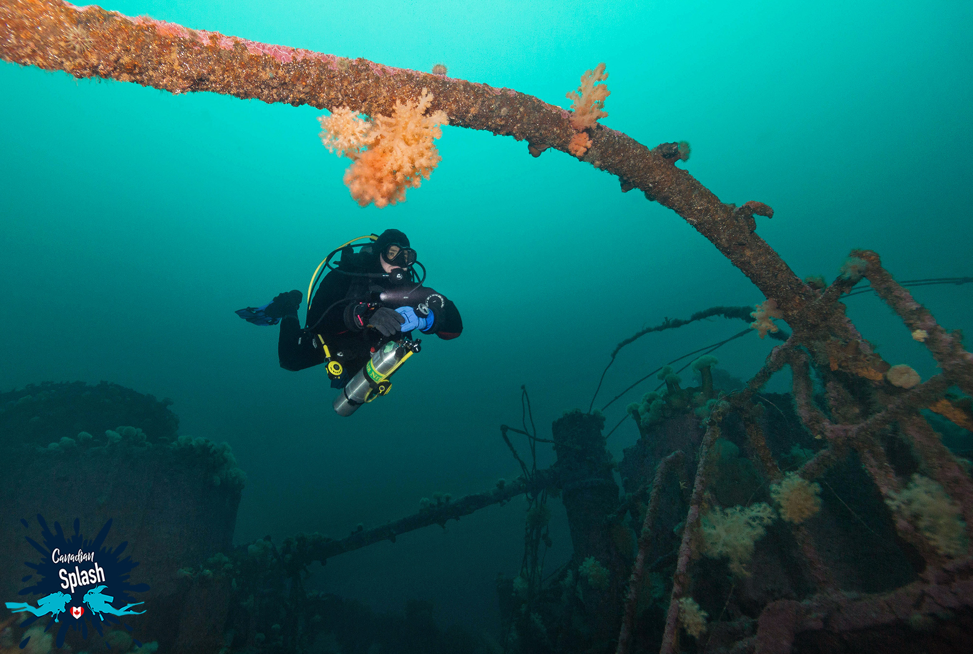 Scuba Diving Joey Exploring Above A Bell Island Shipwreck In Newfoundland, Canadian Splash