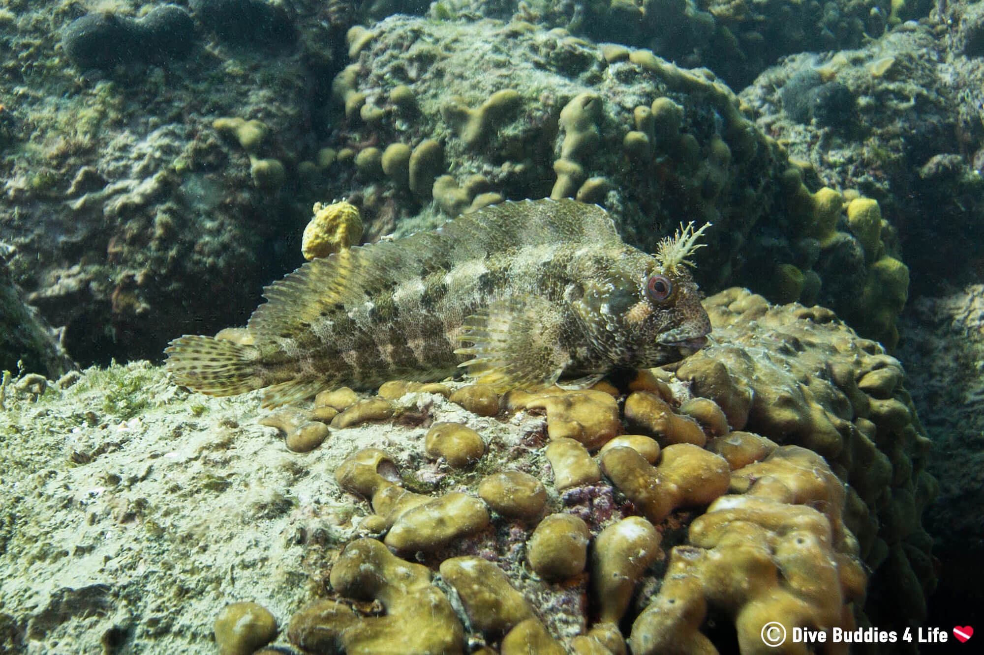 Scuba Diving Piran Slovenia And Finding A Species Of Blenny
